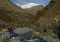 Inland_Kaikouras_Aug07_0033 200x140