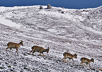 Annapurna_115 200x140