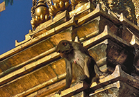 Kathmandu_028 200x140