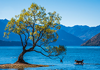 Wanaka New Zealand mountain images and information